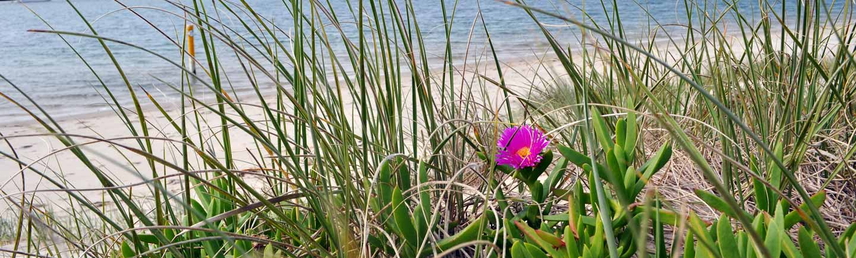 slide-dunes